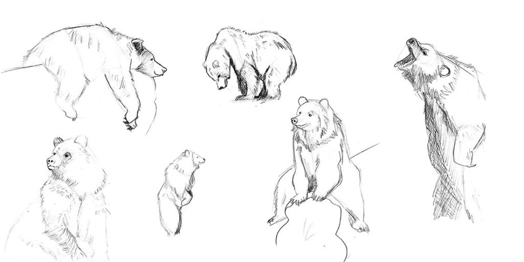 ilustratour premio plum pudding grizzly bear ganadora 2015 maverick sketch animal oso garabato doodle sketchbook