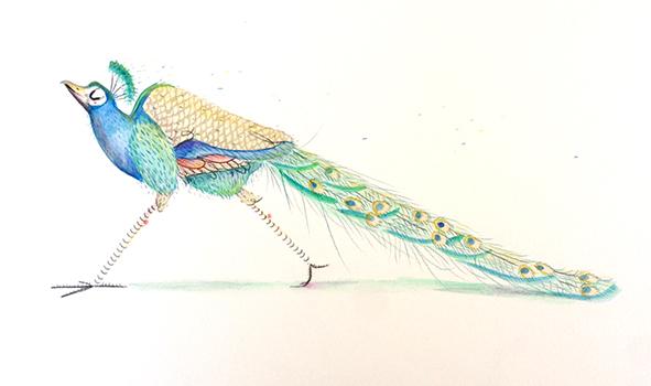 ilustración en acuarela, boceto de Pavo real del parque de valladolid después de Ilustratour 2014